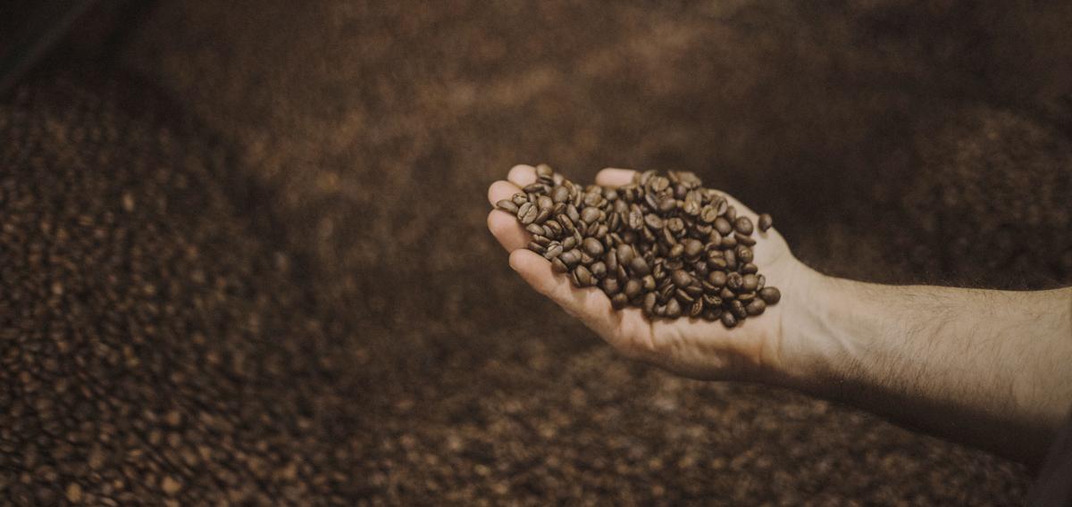 café de especialidad 100% arábica